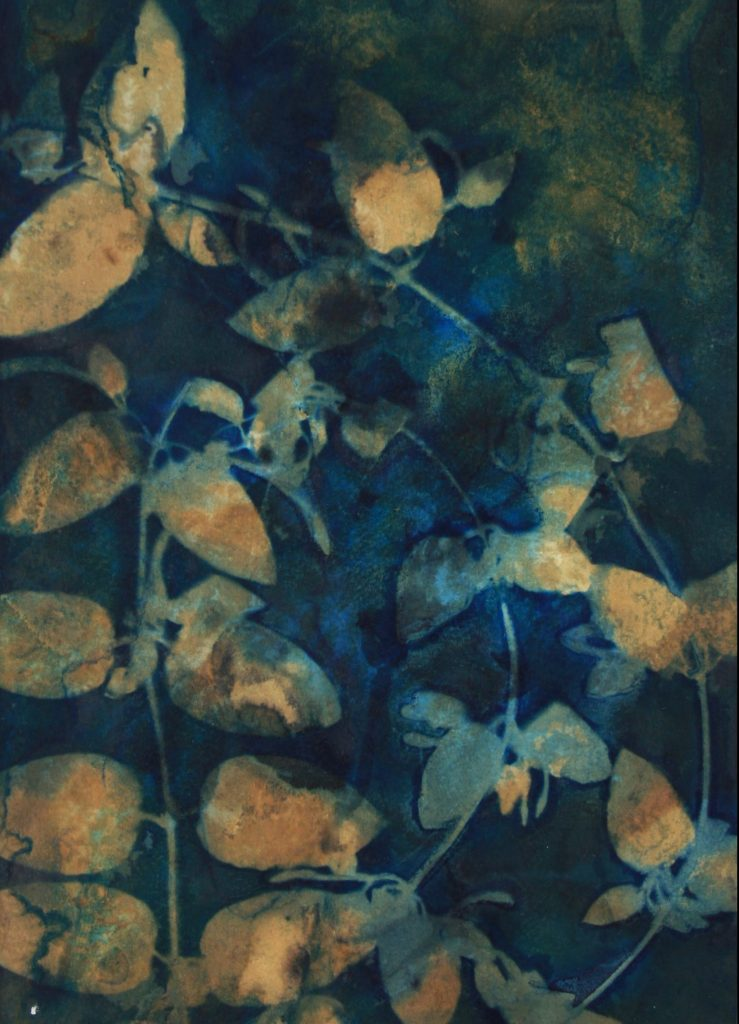 toned, double exposure cyanotype of honeysuckle in nuances of gold yellow, blues and greens